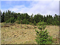 NY5685 : Forestry in Glen Dhu by Walter Baxter
