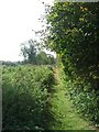 TL6898 : Bridleway to Wretton Fen by Alison Rawson