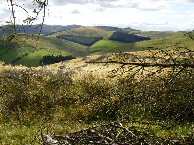 View of the Cheviots from above Elsdonburn