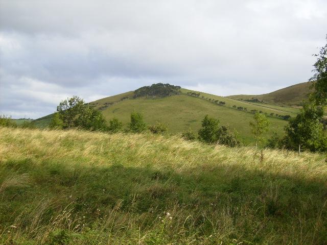 Homilton Hill