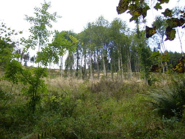Sparse woodland in Moffat Dale above the A708 road