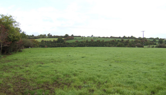 Pasture land east of Taghmon