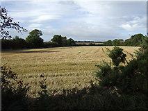 S8423 : Stubble field in September by Jonathan Billinger