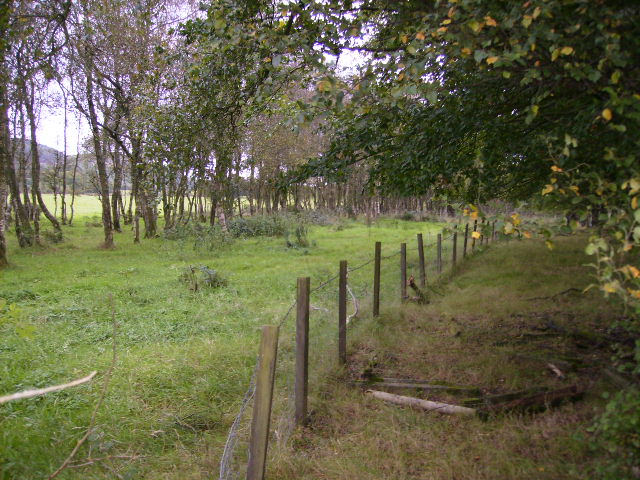 Copse by the A711 at Netherfield
