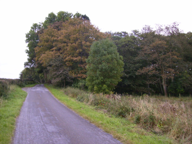 Edingham Loch is completely shielded by this woodland