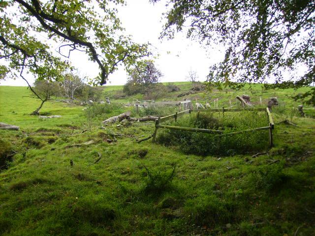 Rough field near Townhead