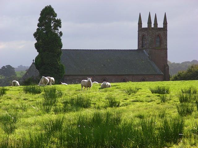 Sheep at St Mary's, Stapleton