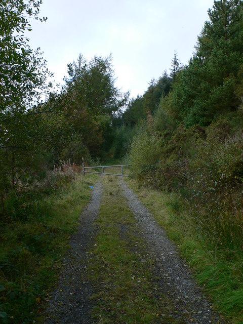 Forestry track near Llyn Celyn