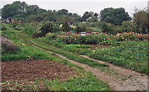 SP1729 : Allotments at Longborough by Andy Stephenson