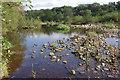 NY7163 : River South Tyne, Haltwhistle by Stephen McKay