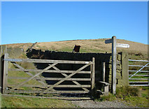 SD9810 : Pennine Bridleway, Moor Lane by michael ely