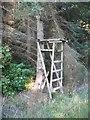 NT5722 : Deer seat, Lambslair Plantation by Richard Webb