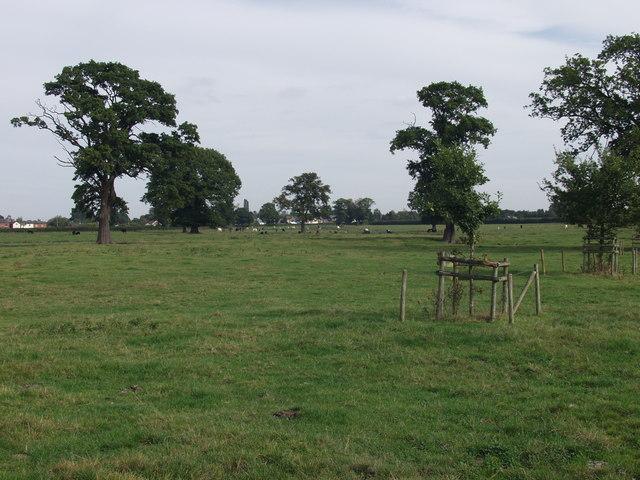 Parkland grazings