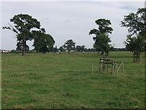 SJ2618 : Parkland grazings by John Haynes