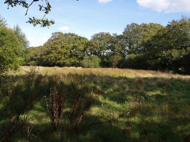 Meadow beside Woolladen Clay Tip