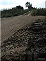 TG4325 : Track to Lambridge Covert by Evelyn Simak
