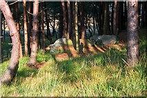 SE8097 : Boulders in Forestry near Tranmire Bogs. by Steve Partridge