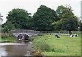 SJ6541 : Grazing by Coxbank Bridge, Shropshire Union Canal, Cheshire by Roger  Kidd