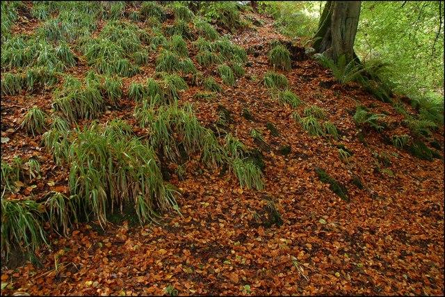 Autumn leaves, Glenoe glen