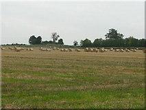 S8470 : Bales in a field by liam murphy