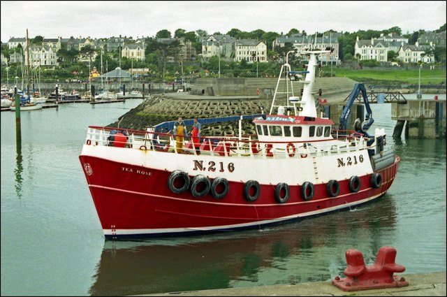 "The ""Tea Rose"" at Bangor"