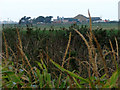 TG4720 : View north across overgrown drain by Evelyn Simak