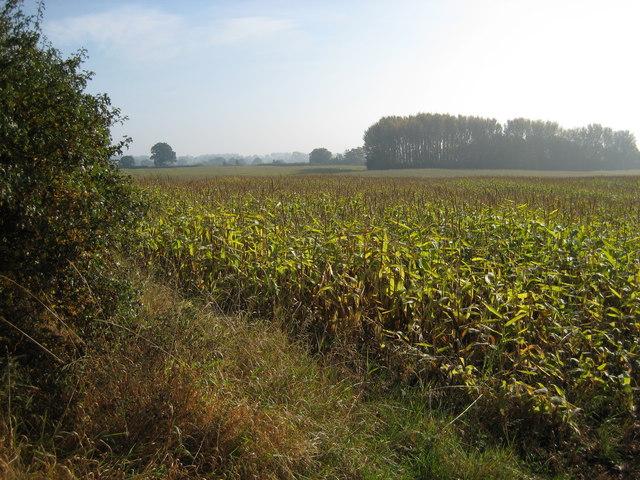 Farmland south of Adderley