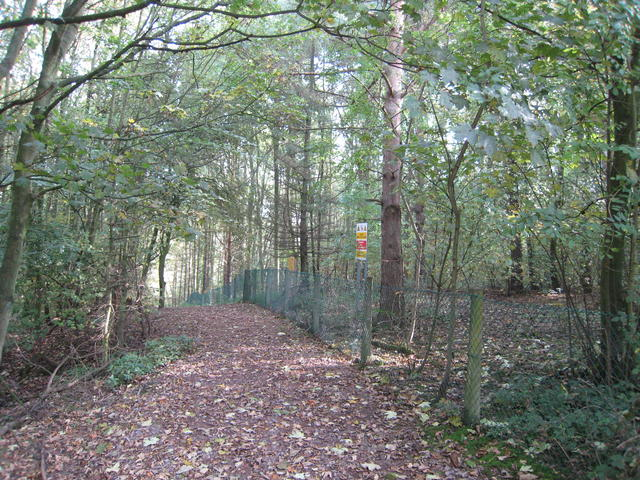 Footpath in Brown's Coppice