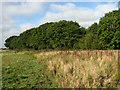 TG4324 : Woodland near Bells Marsh by Evelyn Simak