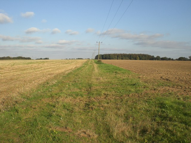 East towards plantation south of Fox Covert