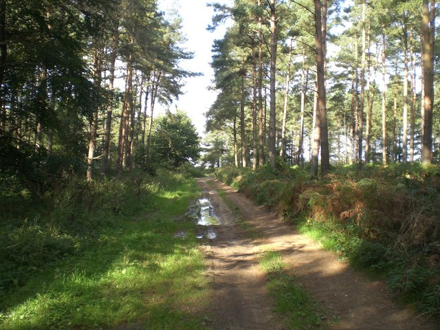 Track north through Grimston Carr