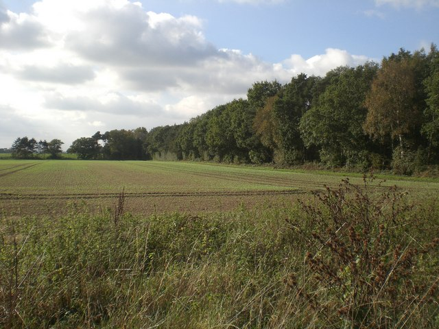 East from track out of Grimston Carr