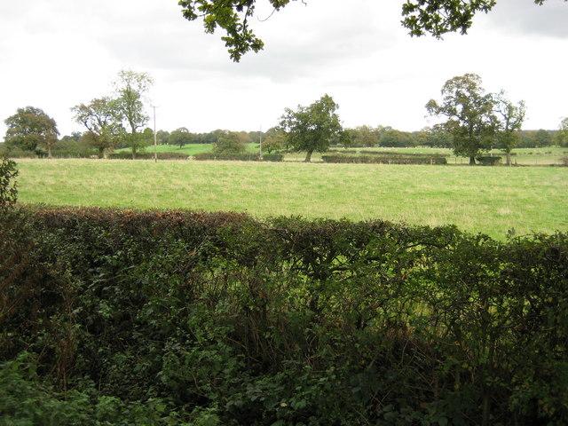 Farmland south of Myotts Wood