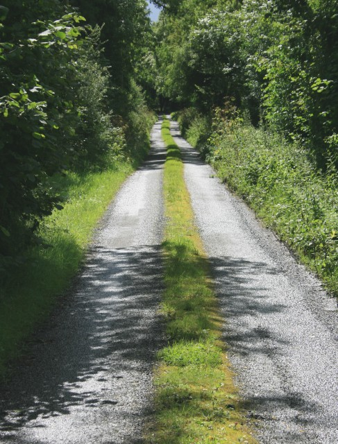 Quiet lane near Cadamstown