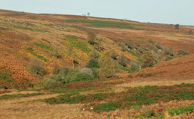 Bar Brook valley in autumn