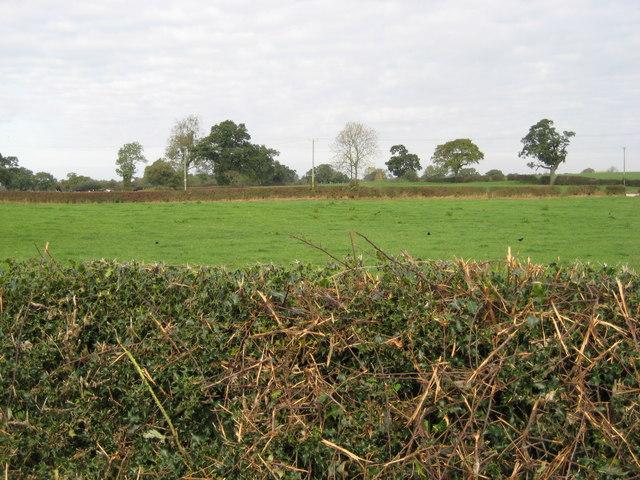 Farmland near Mossley Well Farm