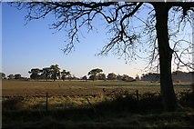 TL8063 : Fields in Little Saxham by Bob Jones