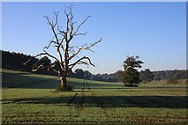 TL8162 : Trees in Ickworth Park by Bob Jones