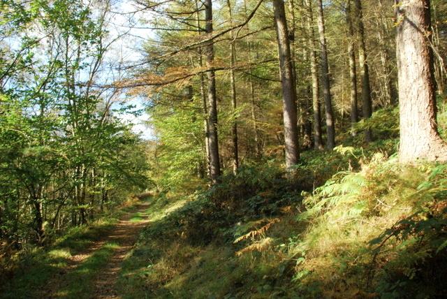 Path along Abney Clough