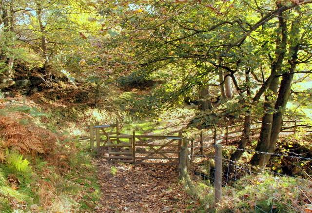 Path junction in Bretton Clough