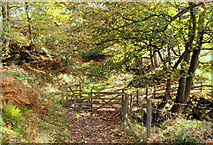 SK2078 : Path junction in Bretton Clough by Roger Temple
