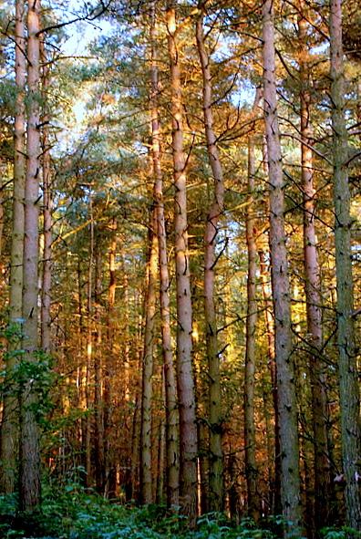 Woods near Oak Farm