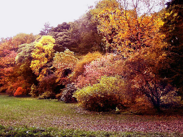 Thorp Perrow in Autumn colours