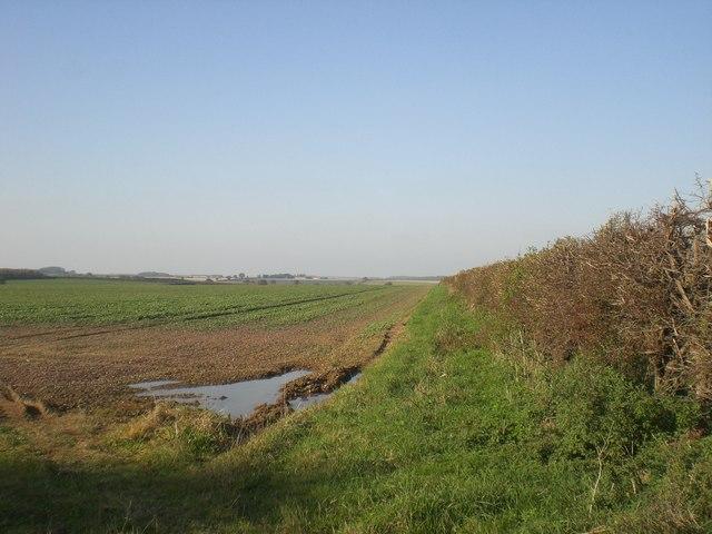 North towards Fieldbarn Farm across carrots