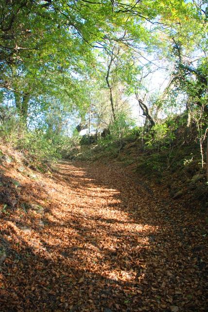 Track through Middleton Plantation