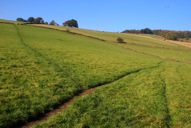 Paths in the grass near Stoke Hall