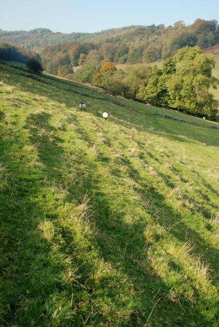 Soil creep in Mag Clough valley