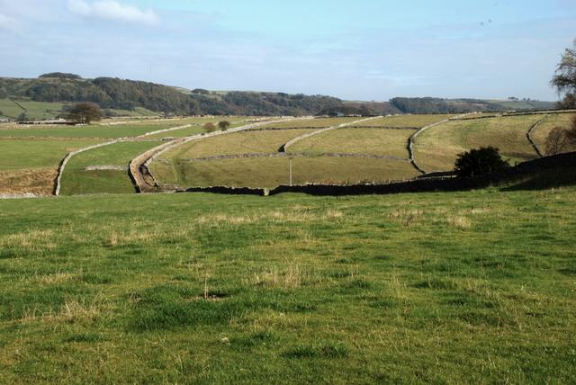 Grassland above Linen Dale