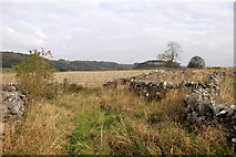 SK2076 : Dry stone walls above Foolow by Roger Temple