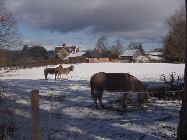 Penylan in the snow